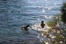 4. Wasser ZEBU<sup>®</sup>-Dorf Mali Losinj - XL - Kroatien