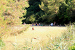2. Spielwiese ZEBU<sup>®</sup>-Dorf Mali Losinj - M - Kroatien