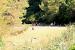 3. Spielwiese ZEBU-Dorf Mali Losinj